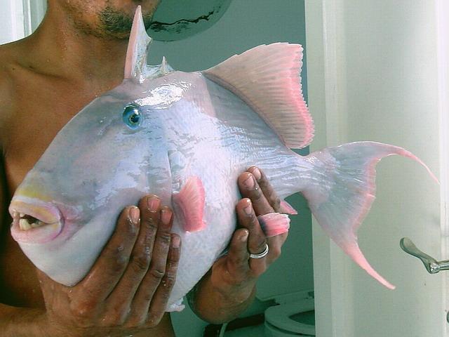 Рыбка из Красного моря.